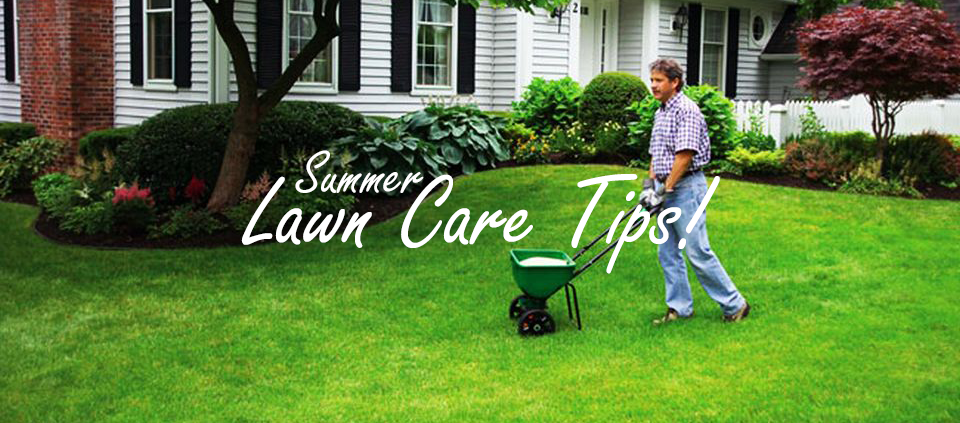 4 lawn care tips