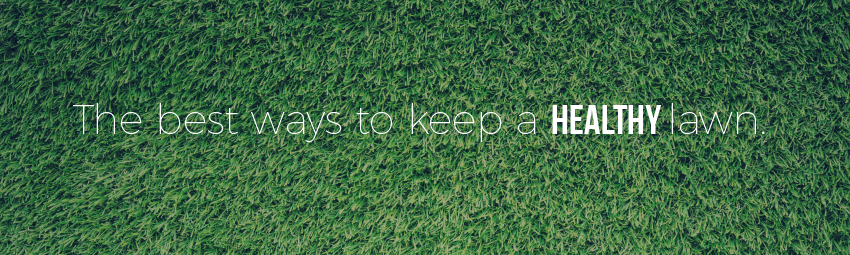 Find the best ways to keep a healthy lawn