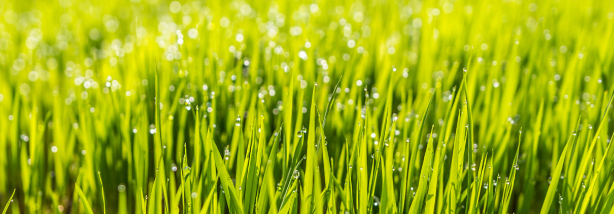 Why should I aerate my lawn? - Presidential Properties Ottawa